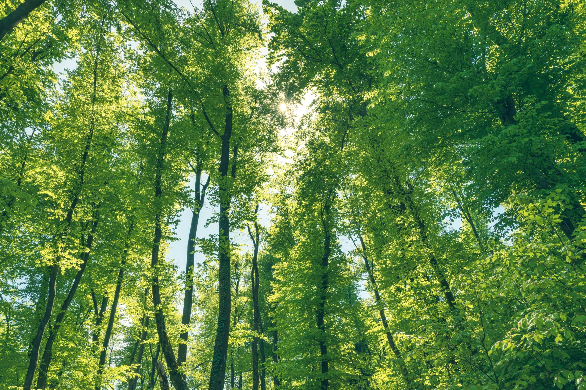 Large Forest